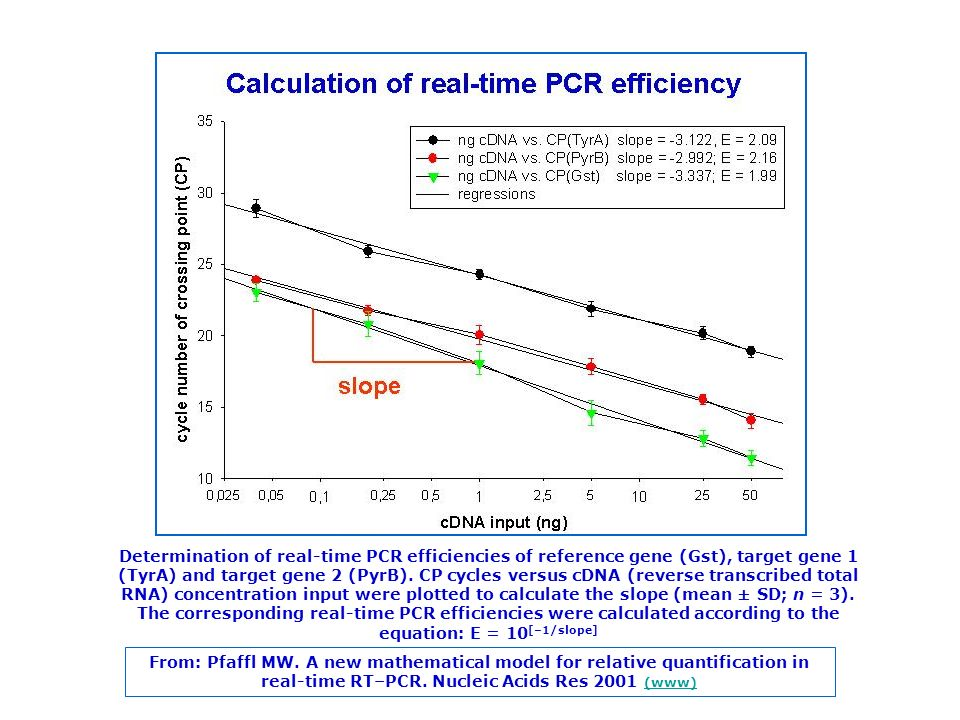 Determination of real-time PCR efficiencies of reference gene (Gst), target gene 1 (TyrA) and target gene 2 (PyrB). CP cycles versus cDNA (reverse transcribed total RNA) concentration input were plotted to calculate the slope (mean ± SD; n = 3). The corresponding real-time PCR efficiencies were calculated according to the equation: E = 10[–1/slope]